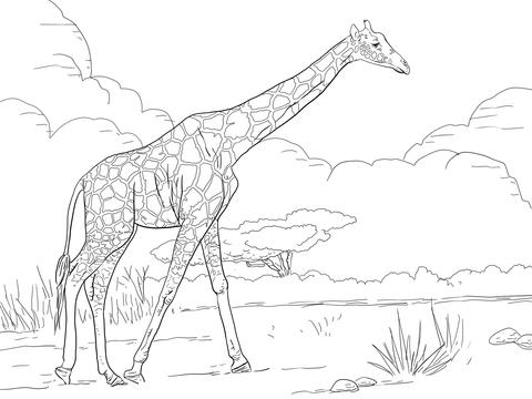 Giraffe Alone