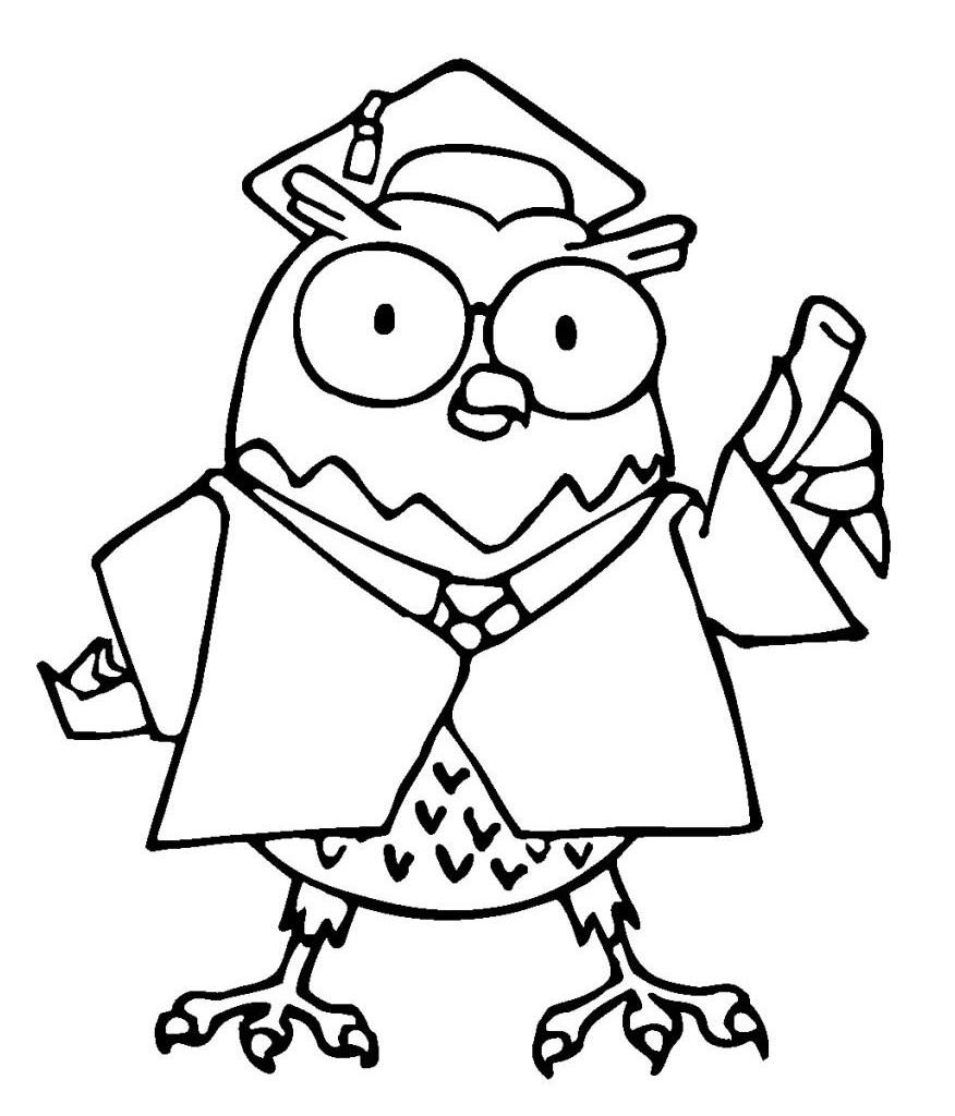 Owl Teaching
