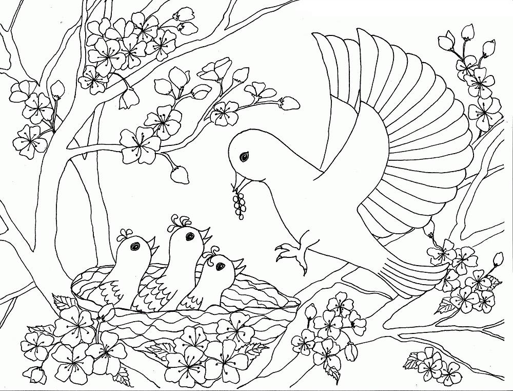 Birds Family On The Cherry Blossom Tree
