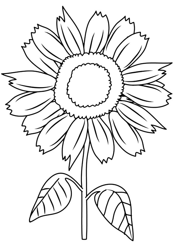 sunny smile sunflower coloring