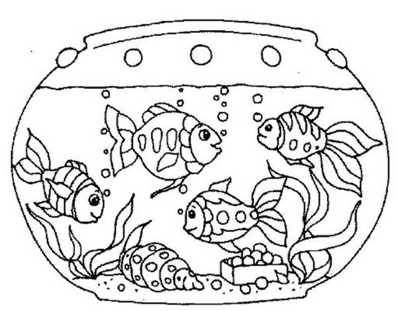 4 Goldfish