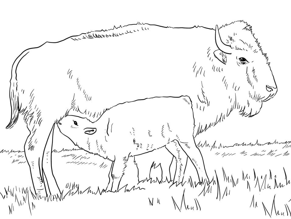 Bison with Calve