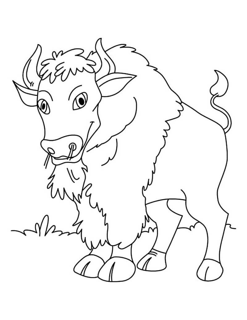 Happy Bison