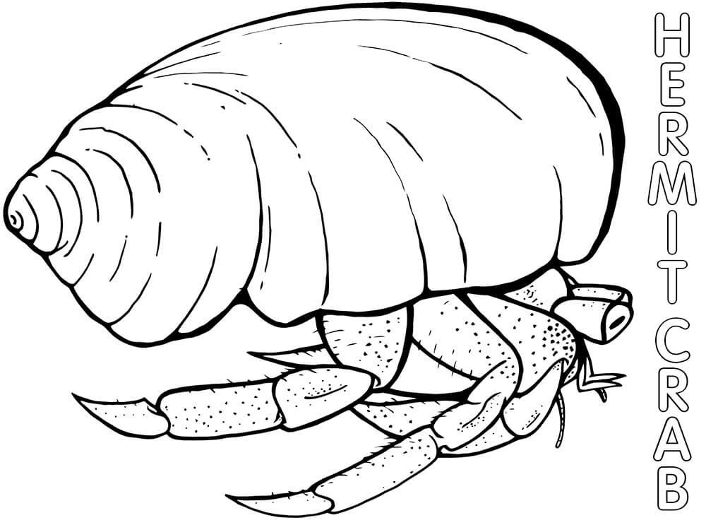 Hermit Crab 5
