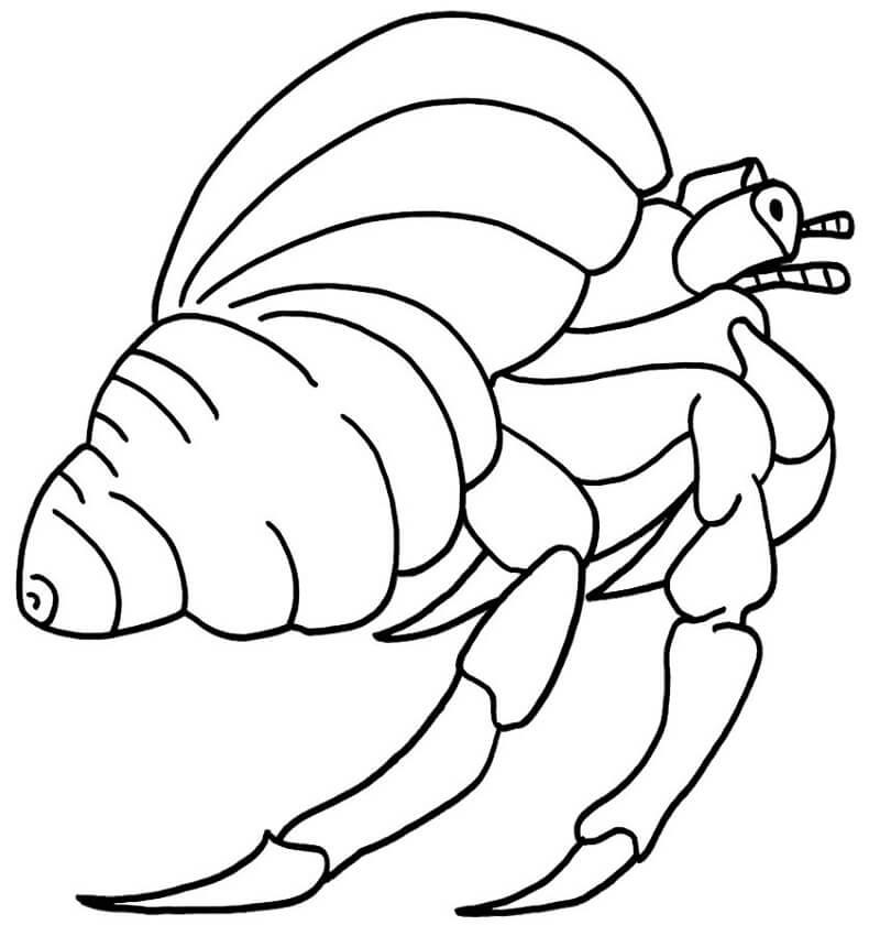 Hermit Crab 6