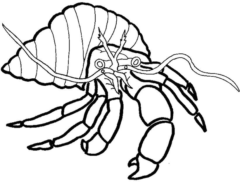 Hermit Crab 7