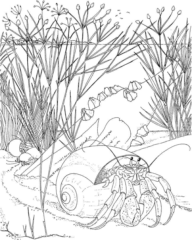 Hermit Crab Under Water