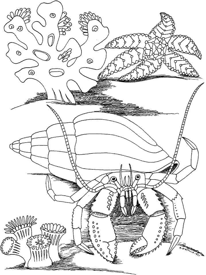 Hermit Crab and Star Fish