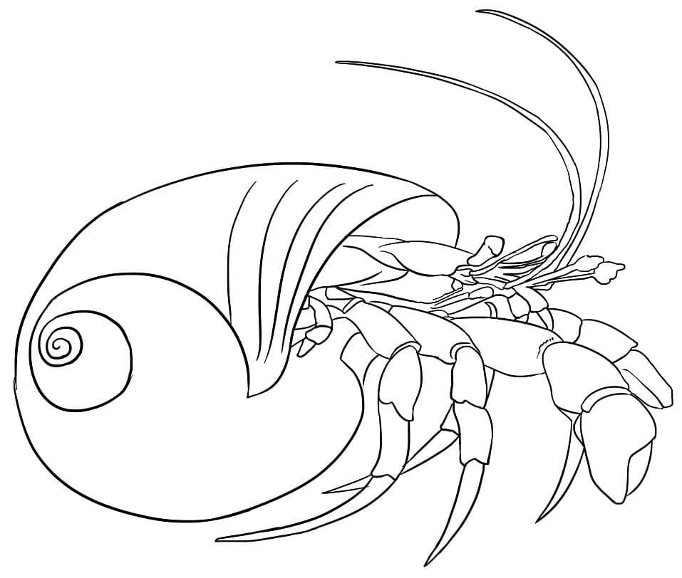 Hermit Crab in Nature