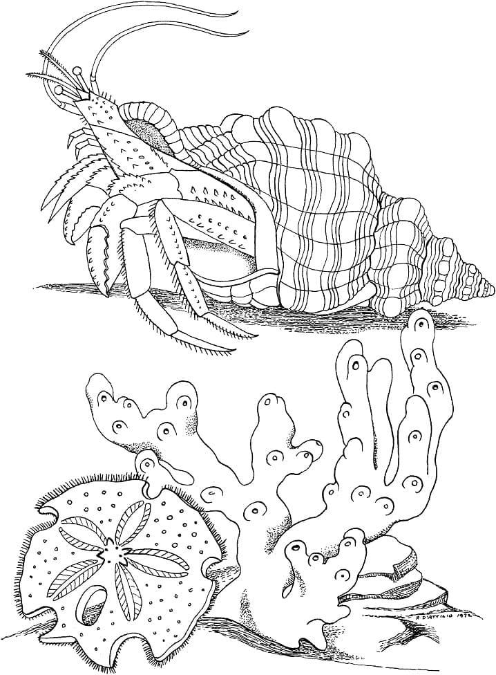 Hermit Crab on a Bottom Line