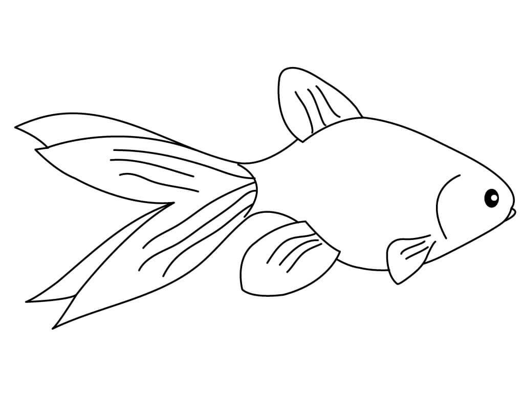 Normal Goldfish