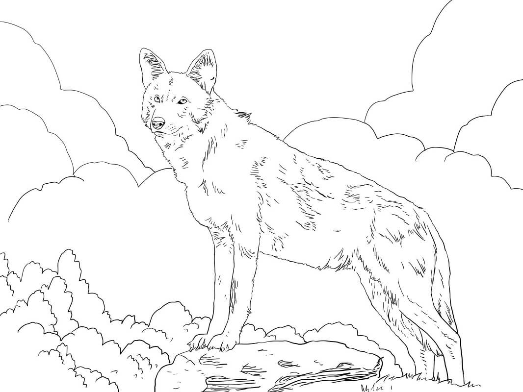 North American Red Wolf