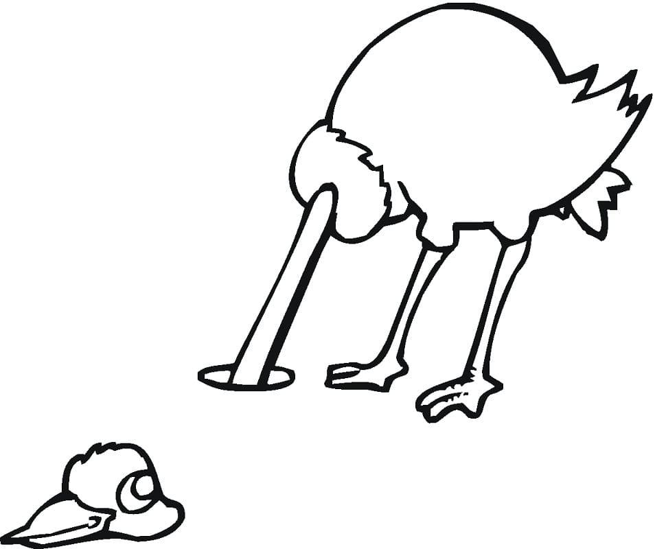 Ostrich 3