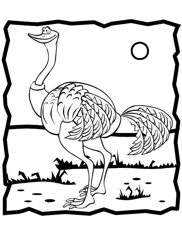 Ostrich 6