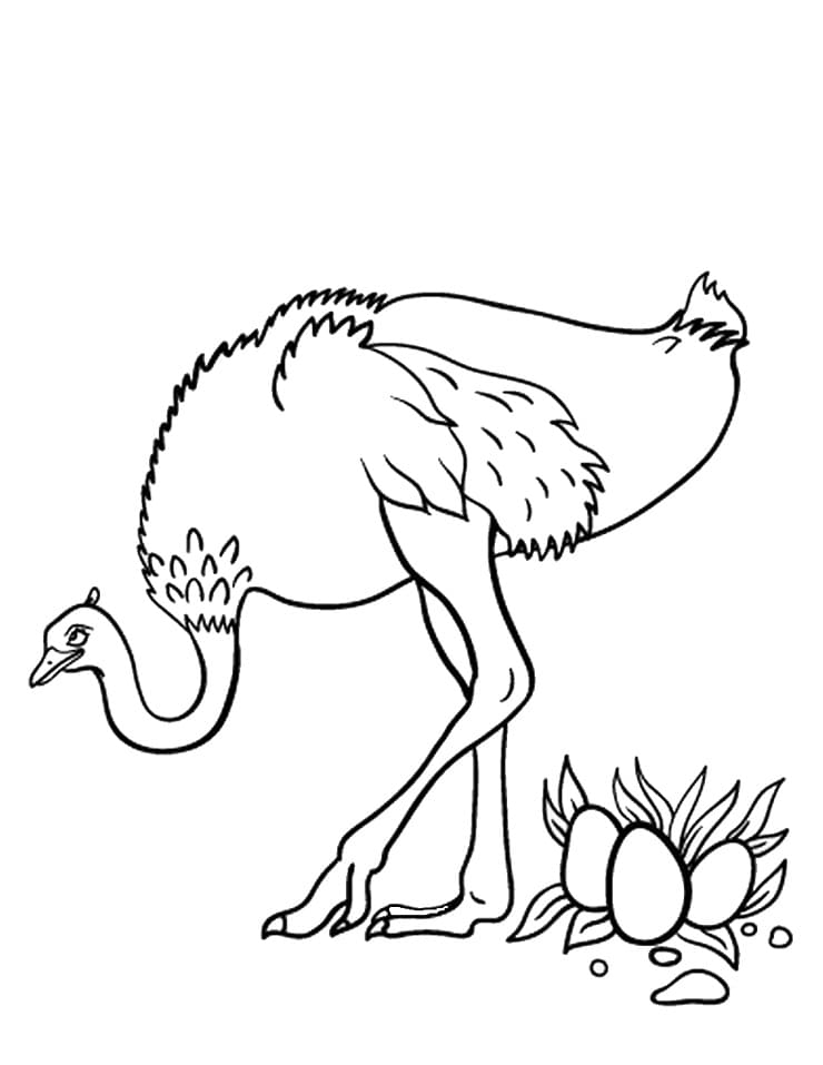 Ostrich and Eggs