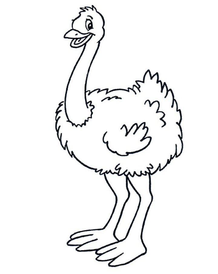 Ostrich is Smiling