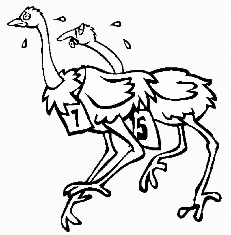 Ostriches are Racing