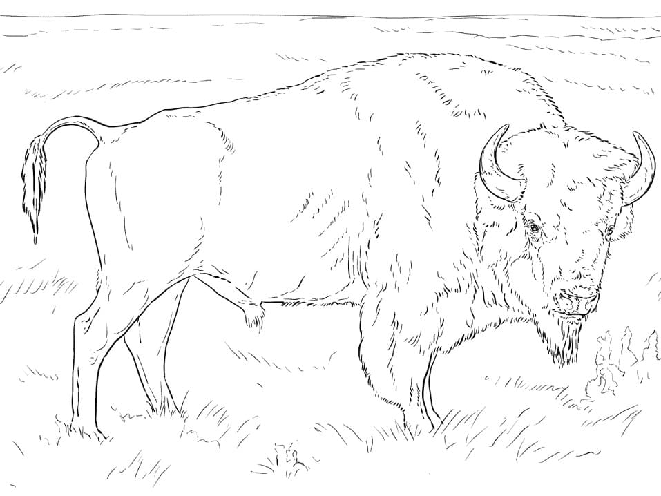 Realistic American Bison