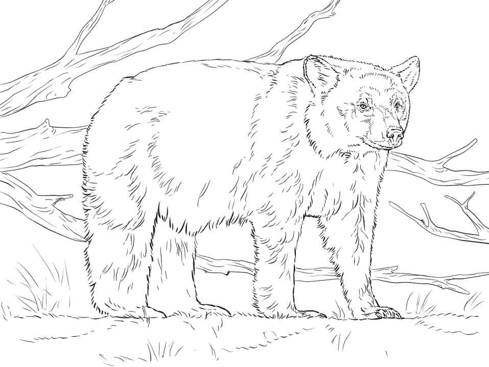 Realistic American Black Bear
