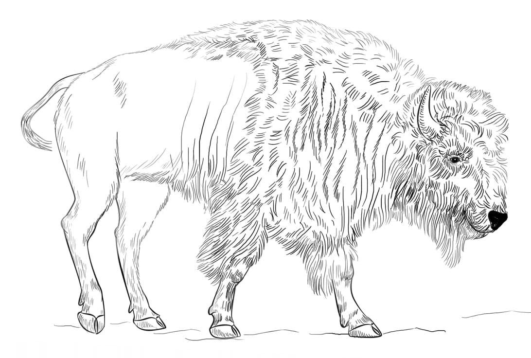 Realistic Bison