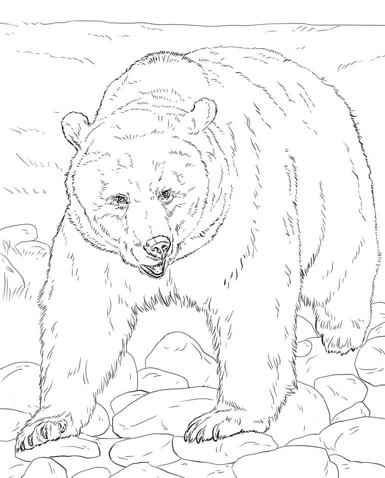 Realistic Brown Bear
