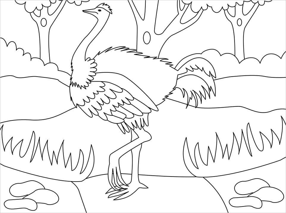 Simple Ostrich