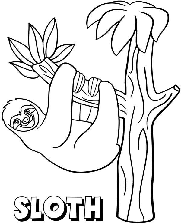Sloth on a Tree