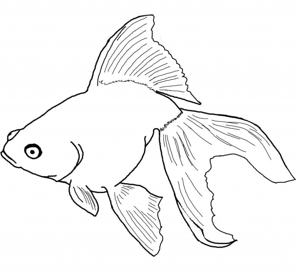 Swiming Goldfish