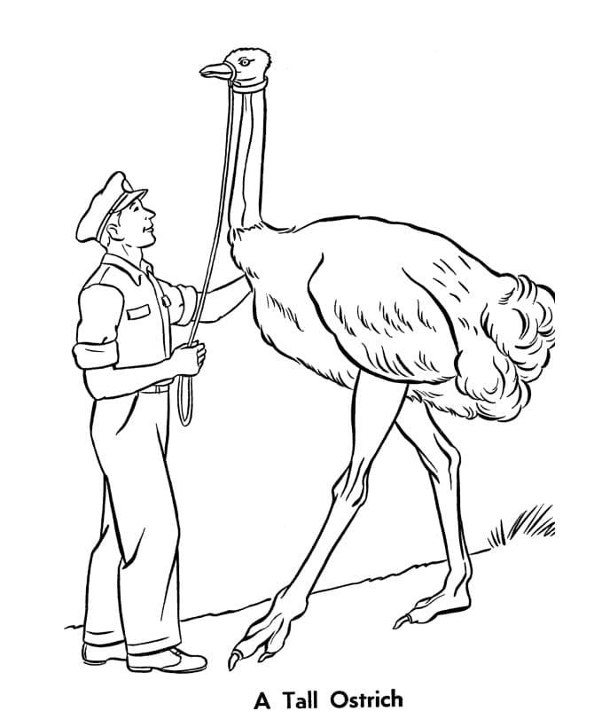 Tall Ostrich