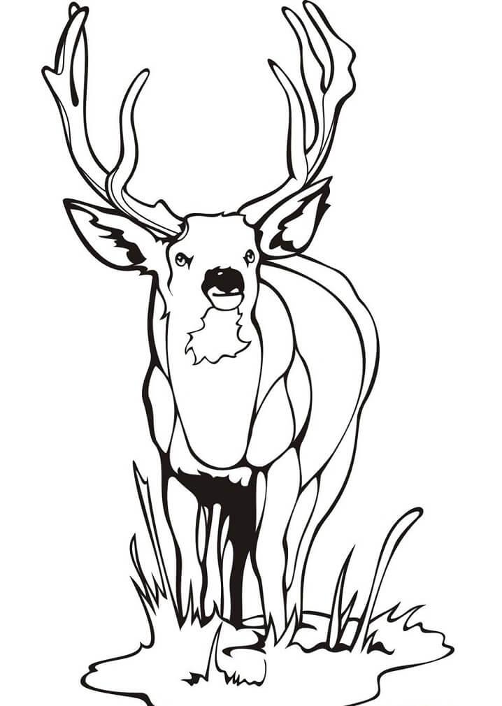 Wild Deer 1