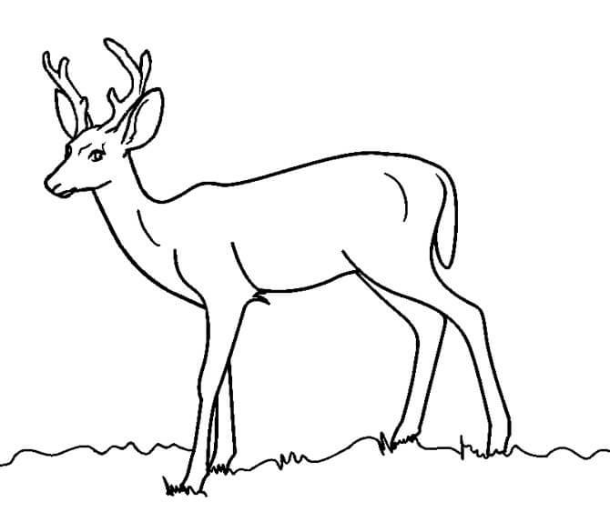Wild Deer 5